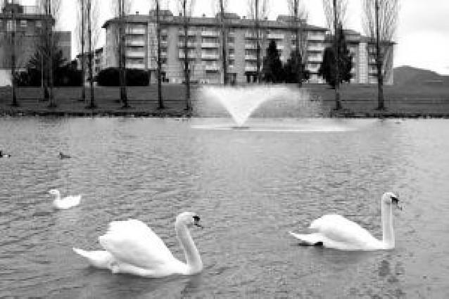 El cuidado de cada m2 de zona verde de Pamplona cuesta dos euros al año