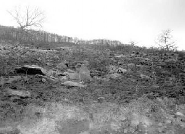 Este mes y medio han ardido 550 hectáreas frente a las 432 afectadas en todo 2007