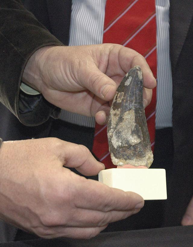 Presentan un diente del dinosaurio depredador más grande de Europa