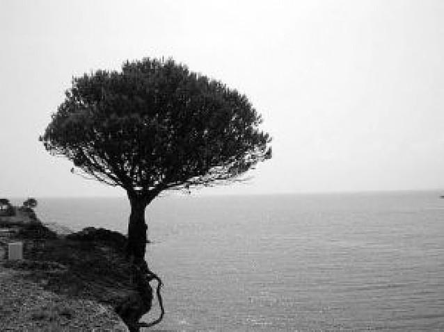 El Mediterráneo español podría perder el 25% de su flora en 2050