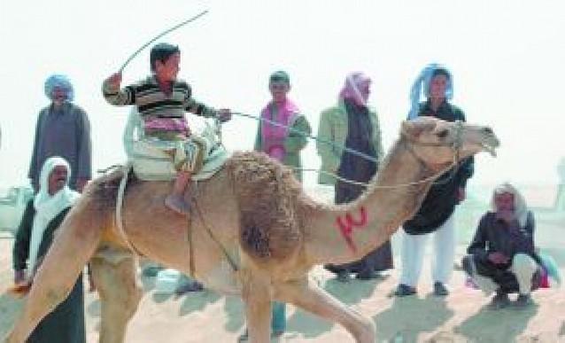 Los niños son los jockeys de camellos en Egipto