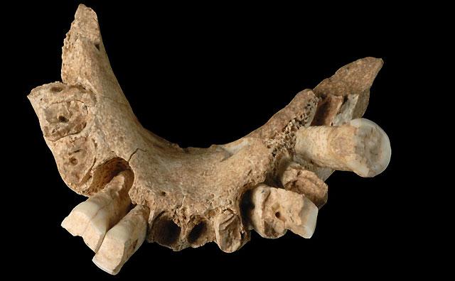 Descubren en Atapuerca el resto fósil humano más antiguo encontrado en Europa