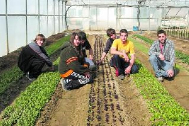 Cultivo masivo de mini-lechugas en Peralta