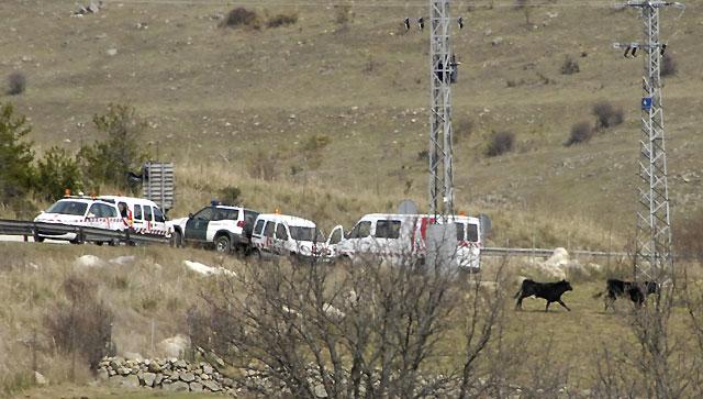 Siete toros invaden la autopista AP-6 y obligan a cortar el tráfico en Segovia