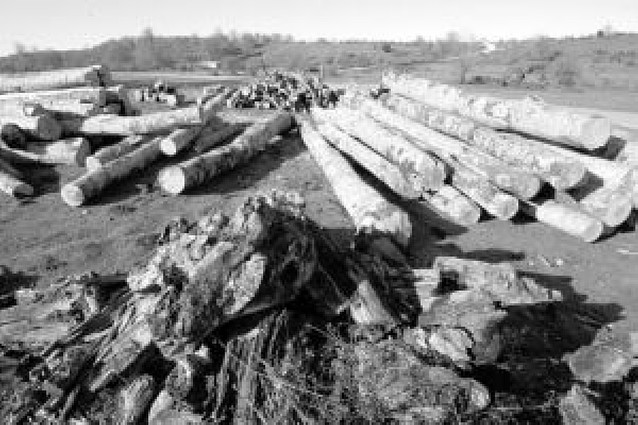 Un estudio avala el uso de la riqueza forestal de Améscoa como biomasa