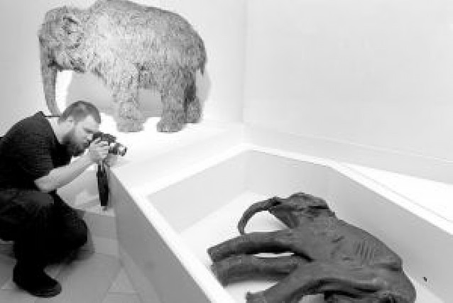 La acción humana y el cambio climático hicieron desaparecer al mamut lanudo