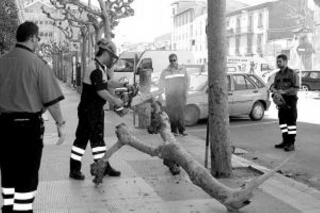 PROTECCIÓN CIVIL RETIRA UNA RAMA CAÍDA DE UN PLATANERO