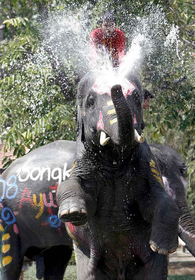 Los elefantes se suman al Songkran o Año Nuevo tailandés