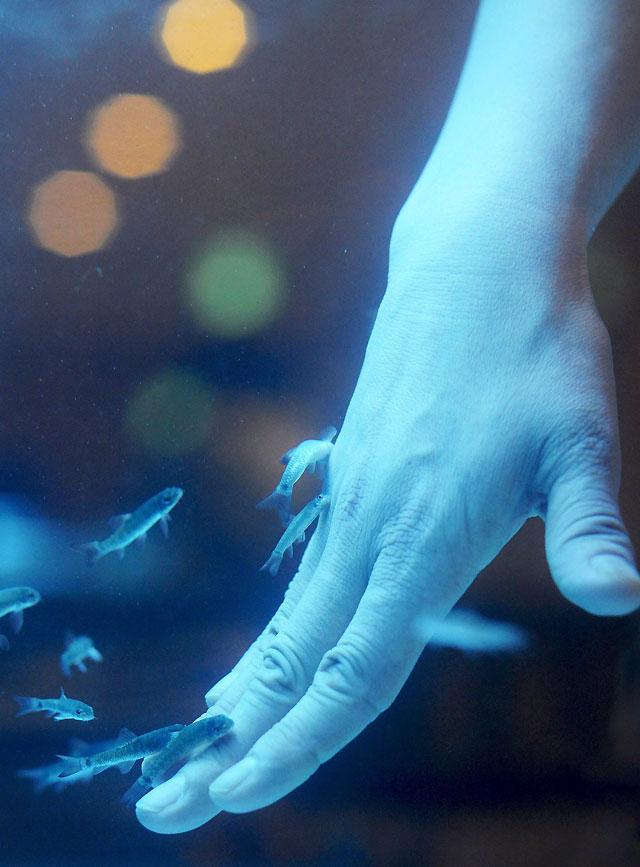"""Los peces """"dermatólogo"""" se convierten en una franquicia mundial"""
