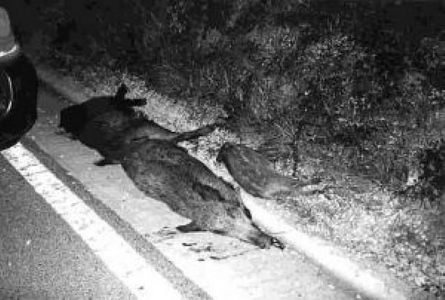 Los cazadores piden más medidas de seguridad en las autopistas