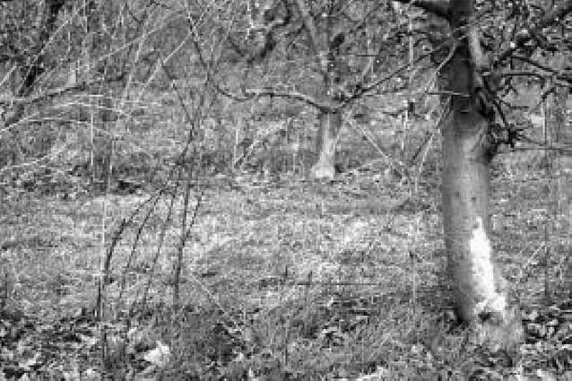Agricultores riberos alertan sobre los daños de los conejos en infraestructuras de regadío