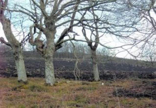 Vecinos de Baztan Bidasoa solicitan 120 permisos de quemas controladas