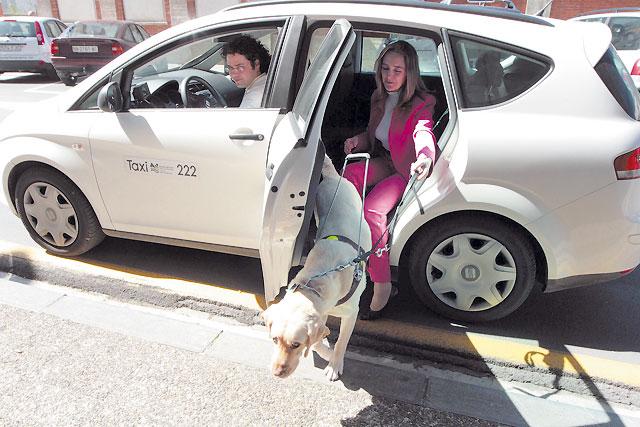 Los perros guía viajan en taxi