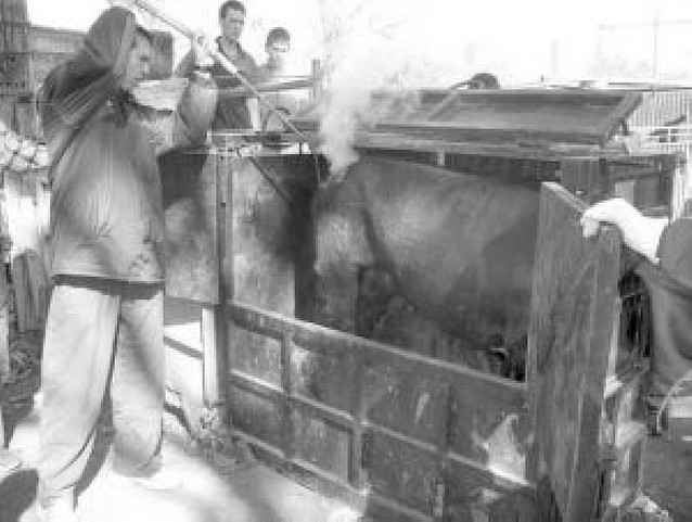 Ganados San Adrián lidiará este año tres novilladas sin caballos