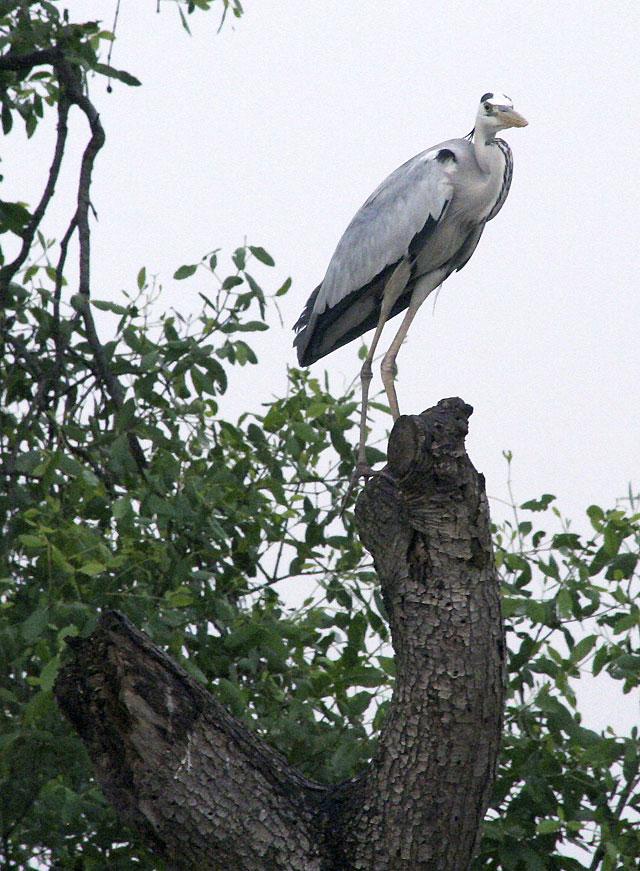 La contaminación de Yakarta amenaza el refugio de aves de Rambut