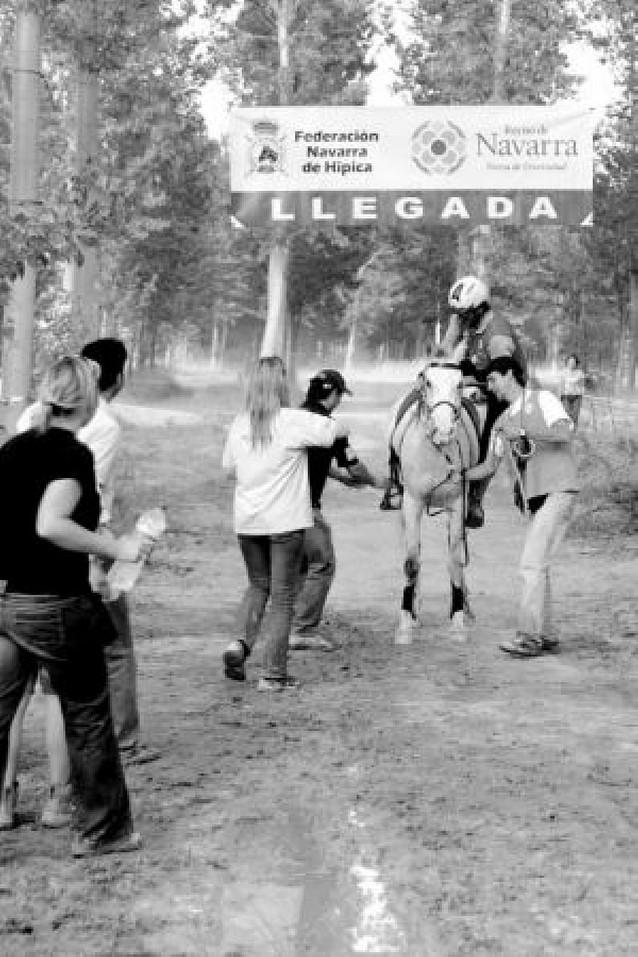 La maratón de los caballos