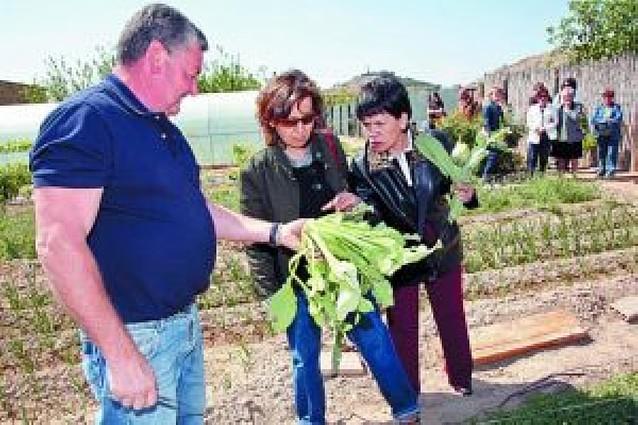 Tudela muestra su verdura a pie de huerta