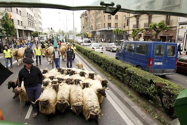 Ganaderos navarros protestan ante el Parlamento por la falta de ayudas agroalimentarias