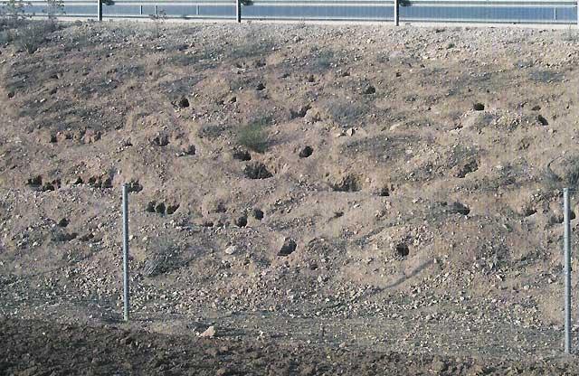 Los conejos ponen en peligro el estado de las carreteras en Castilla La Mancha