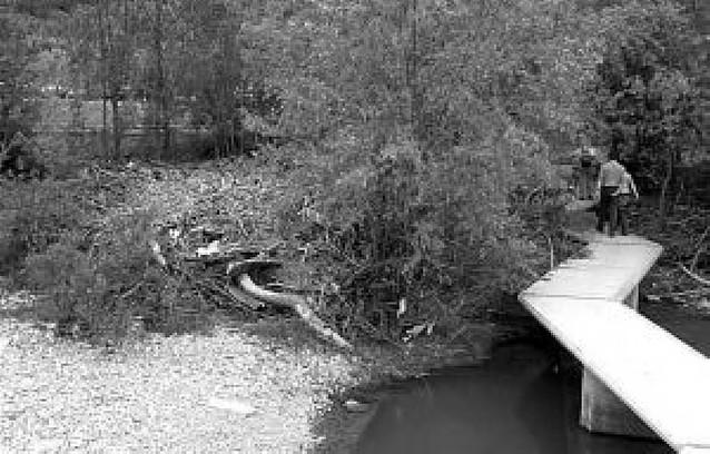 Limpieza insuficiente en el río Arga