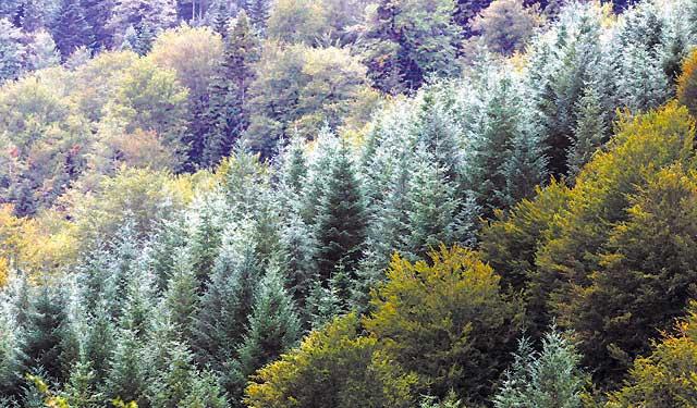 La superficie forestal de Navarra crece un 24% en los últimos 25 años