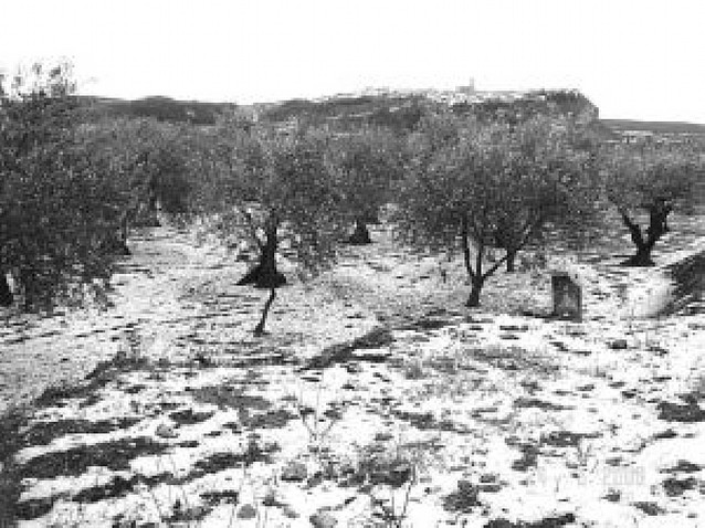 El granizo daña viñas y otros cultivos en Lerín y San Adrián