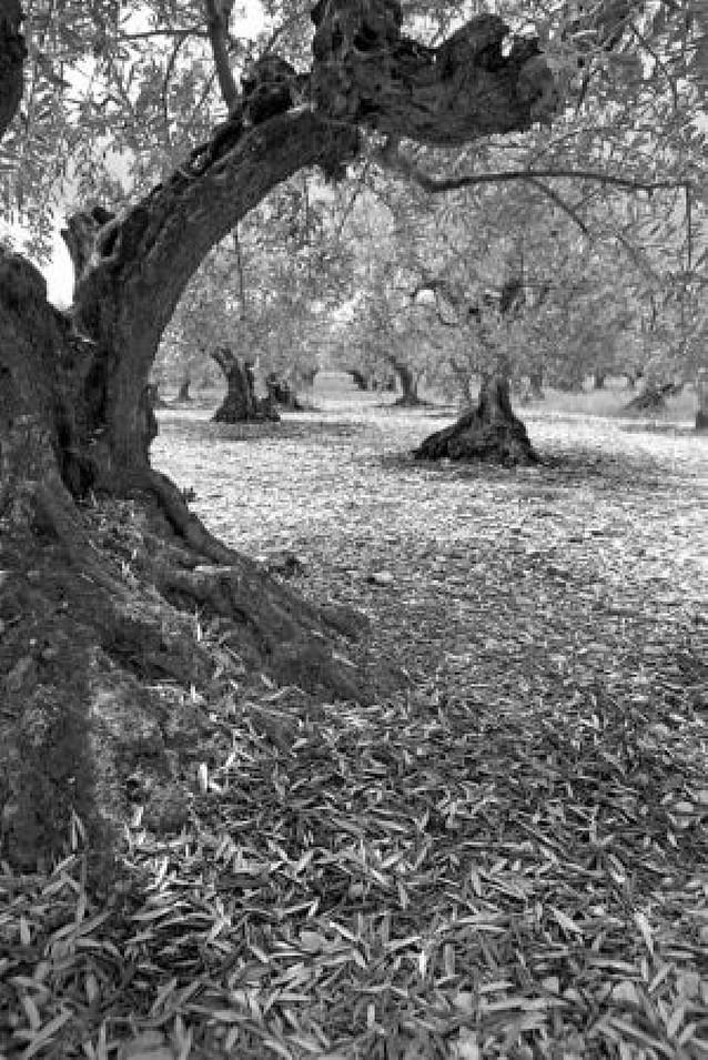 El granizo malogra en Lerín unos 4 millones de kilos de cereal y alrededor de 400.000 de uva