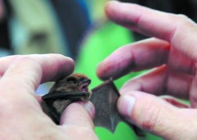 Ayer, jornada sobre los murciélagos en el Aragón