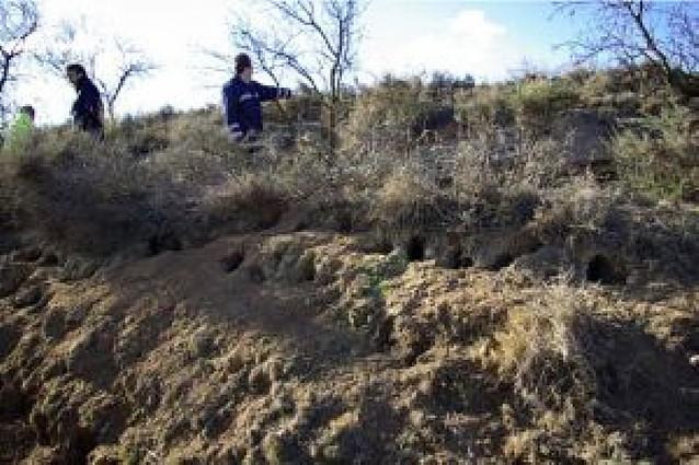 """UAGN exige indemnizaciones """"dignas"""" para los daños causados por los conejos"""