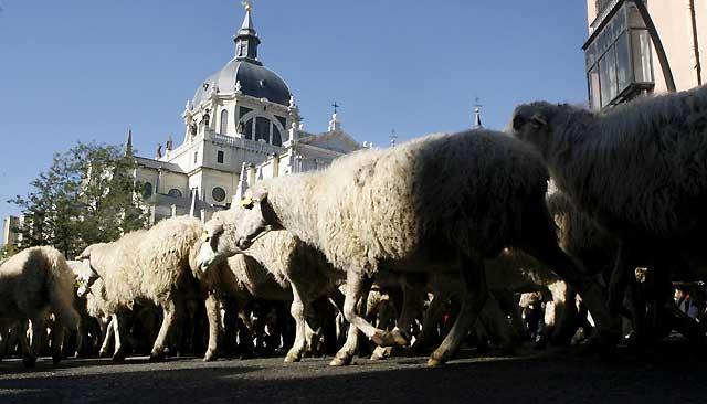 Fallece uno de los participantes de la Fiesta de la Trashumancia en Madrid