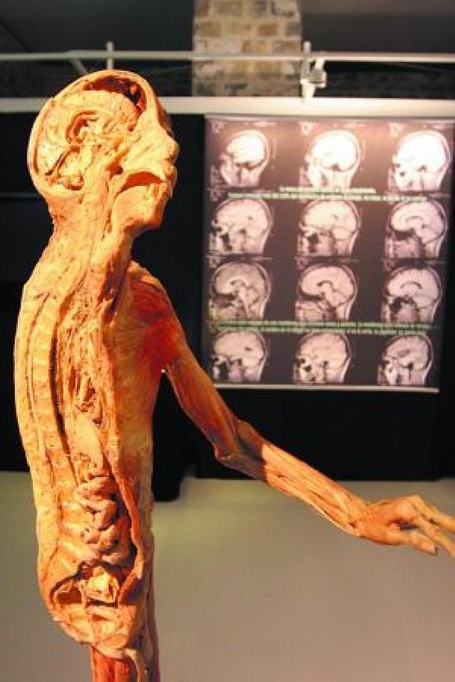 Baluarte muestra lo que la piel esconde