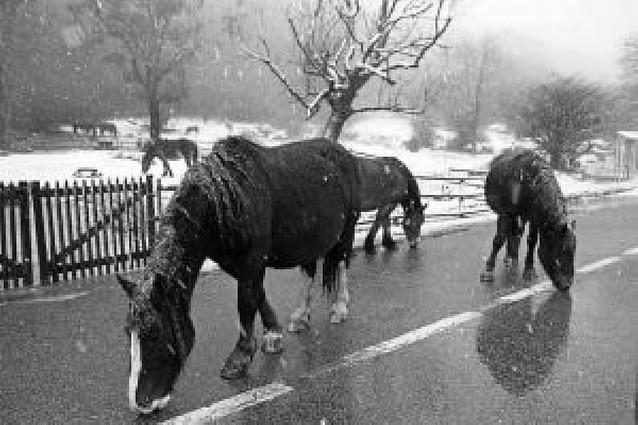 Alerta para hoy por nevadas en el noroeste de Navarra