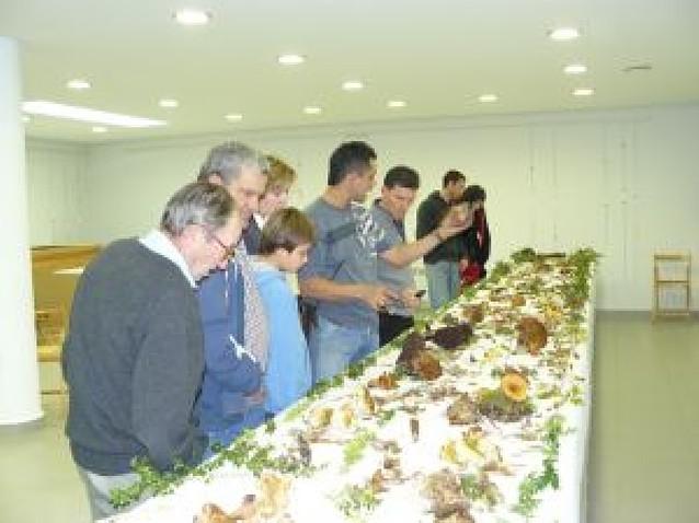 Mendavia muestra a los aficionados 75 especies de setas