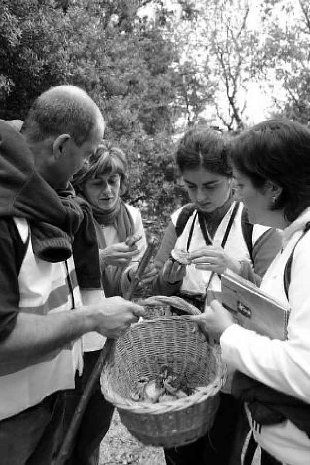 Aprender a llenar la cesta de setas