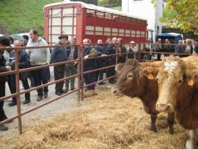 El ganado reivindica su hueco
