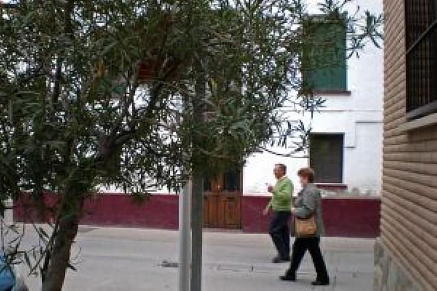 Señales de tráfico tapadas por un árbol en Arguedas