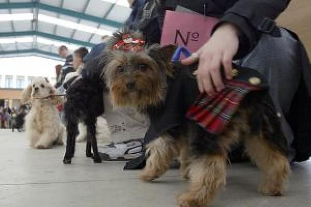 La población de perros de Pamplona se duplica en 10 años y suma 14.100