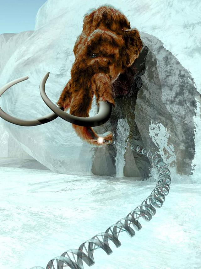 Secuencian el genoma del mamut lanudo