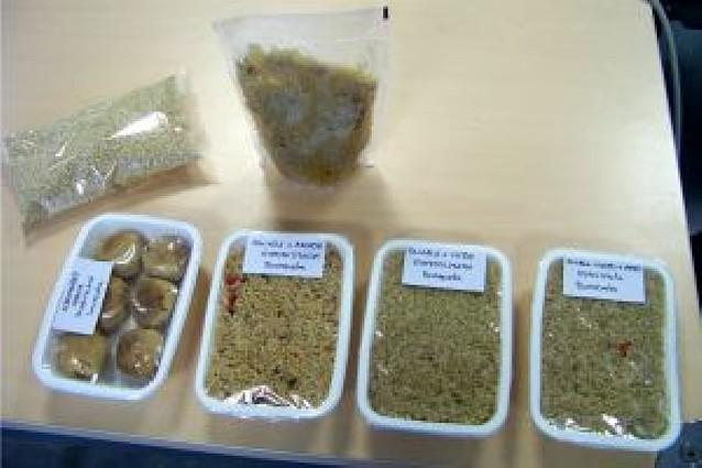 El CNTA presentó las ventajas de la quinoa en la alimentación