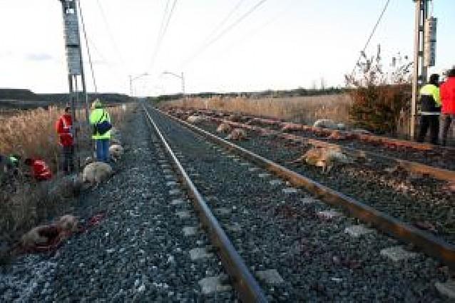 Muere un pastor de Igal al ser arrollado por un tren de pasajeros en Fontellas