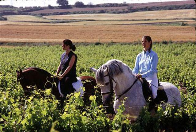 La Ruta del Vino de Navarra pretende crear un producto turístico integrado