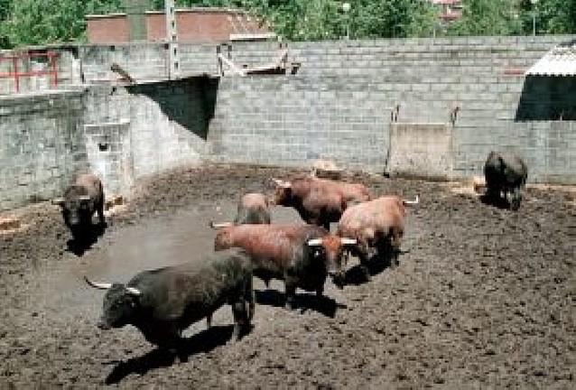 Peñajara regresa a la Feria del Toro pamplonesa once años después