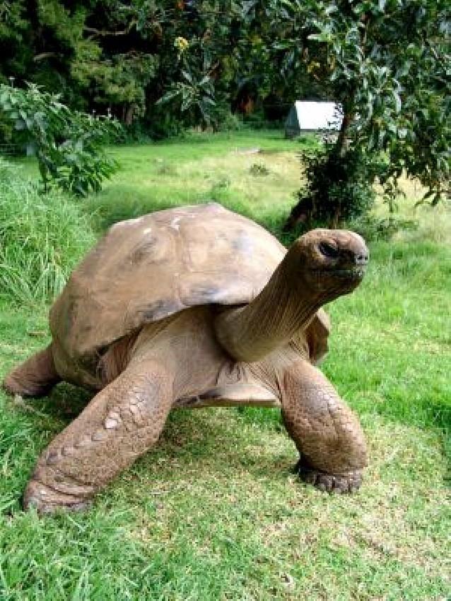 La tortuga más vieja del mundo tiene 176 años