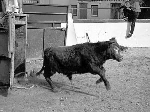 El Patillas, 41 años de casta navarra