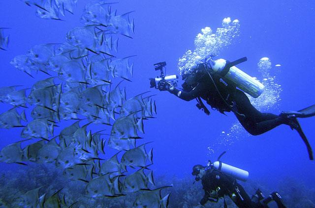 Oceana filma 12.000 millas de fondo submarino para denunciar su destrucción