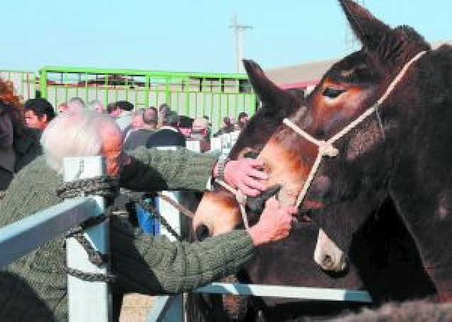 Tafalla destinará 29.000 euros a la organización de las ferias de febrero