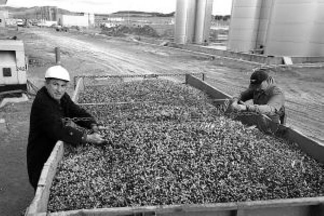 Urzante produce 200.000 litros de aceite de DO Navarra en su nuevo trujal