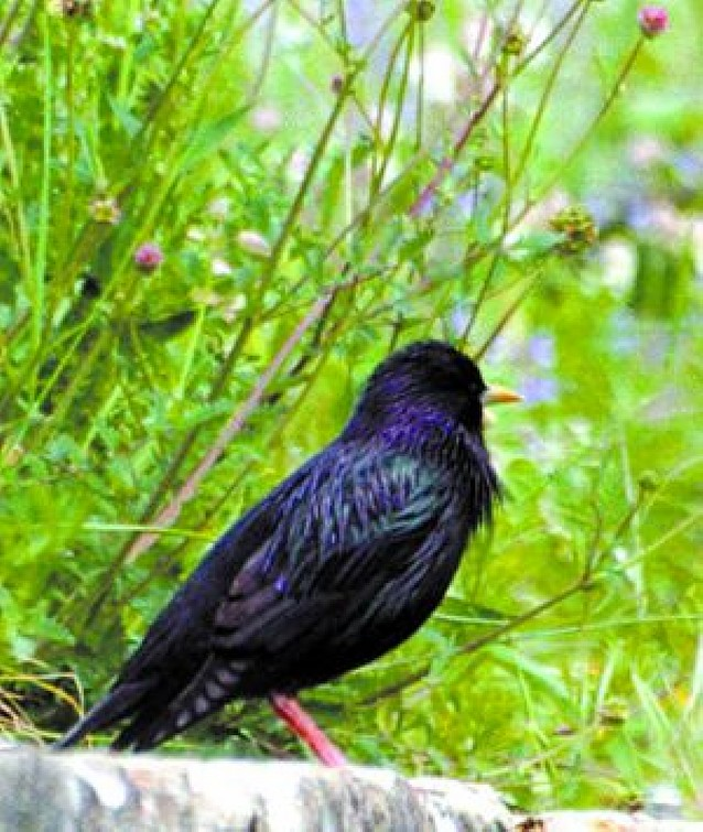 Noventa y cuatro especies de aves habitan en Pamplona