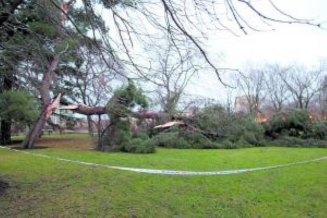 El temporal de viento del pasado fin de semana derribó 45 árboles en Pamplona