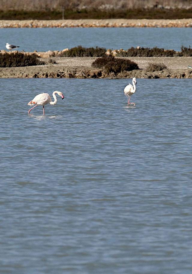 Ecologistas en Acción denunció el deterioro de los humedales costeros